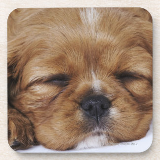 Cavalier King Charles Spaniel puppy sleeping Coasters