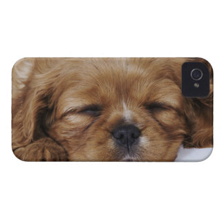 Cavalier King Charles Spaniel puppy sleeping iPhone 4 Cover