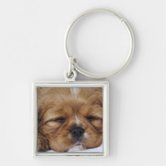 Cavalier King Charles Spaniel puppy sleeping Key Chains