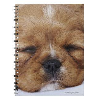 Cavalier King Charles Spaniel puppy sleeping Notebook