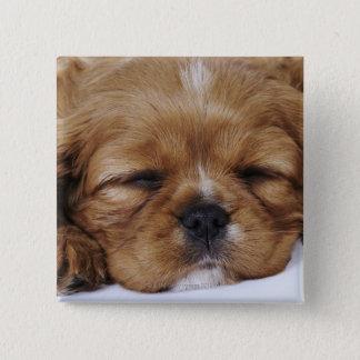Cavalier King Charles Spaniel puppy sleeping Pinback Button