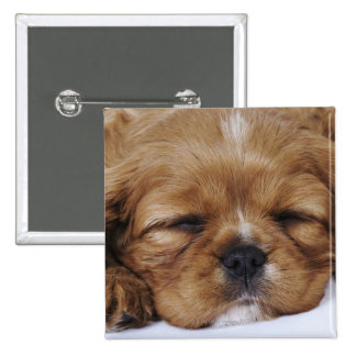 Cavalier King Charles Spaniel puppy sleeping Pinback Button