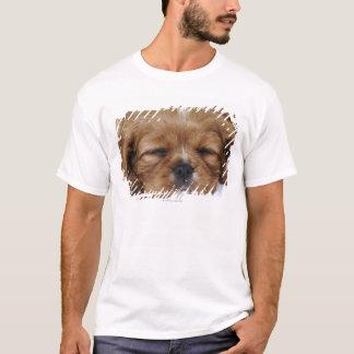 Cavalier King Charles Spaniel puppy sleeping T-Shirt