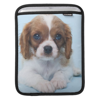Cavalier King Charles Spaniel Puppy Sleeve For iPads