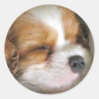 Cavalier King Charles Spaniel Puppy Stickers