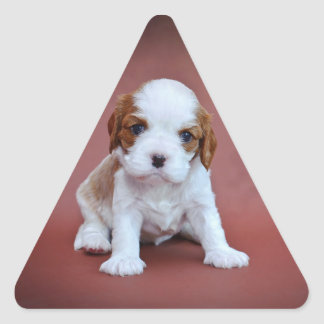 Cavalier King Charles Spaniel puppy Triangle Sticker