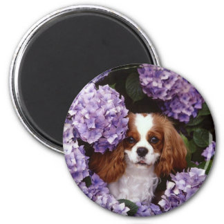 Cavalier King Charles Spaniel Red and White 2 Inch Round Magnet
