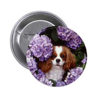 Cavalier King Charles Spaniel Red and White Pinback Button