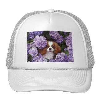 Cavalier King Charles Spaniel Red and White Trucker Hat