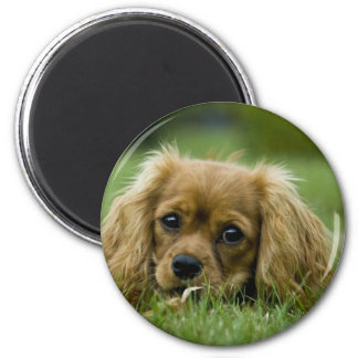 Cavalier King Charles Spaniel Ruby 2 Inch Round Magnet