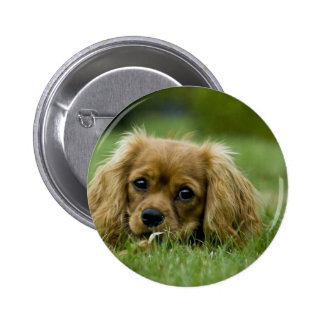 Cavalier King Charles Spaniel Ruby Button