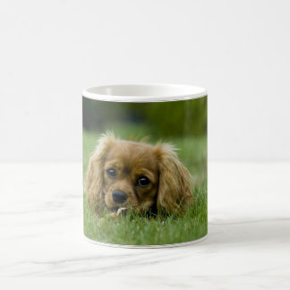 Cavalier King Charles Spaniel Ruby Coffee Mug
