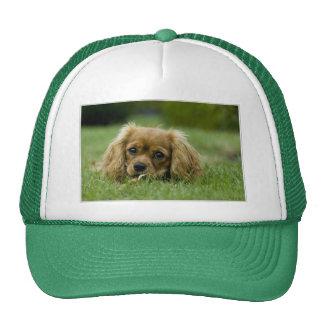 Cavalier King Charles Spaniel Ruby Trucker Hat