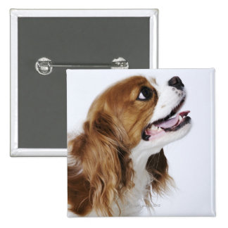 Cavalier King Charles Spaniel, side view Button