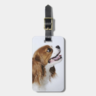 Cavalier King Charles Spaniel, side view Luggage Tags