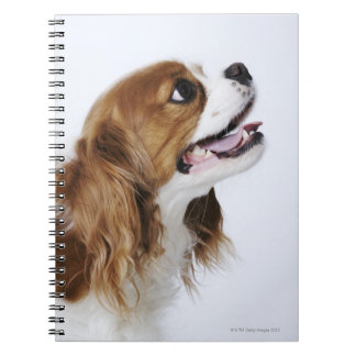 Cavalier King Charles Spaniel, side view Notebook