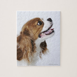 Cavalier King Charles Spaniel, side view Puzzles