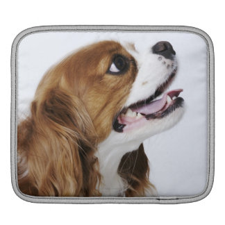 Cavalier King Charles Spaniel, side view Sleeve For iPads
