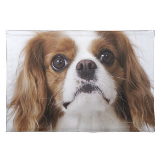Cavalier King Charles Spaniel sitting in studio Cloth Placemat