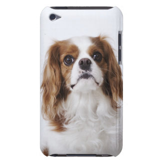 Cavalier King Charles Spaniel sitting in studio iPod Touch Case
