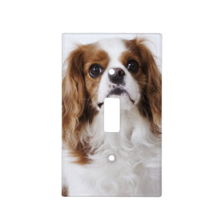 Cavalier King Charles Spaniel sitting in studio Light Switch Cover