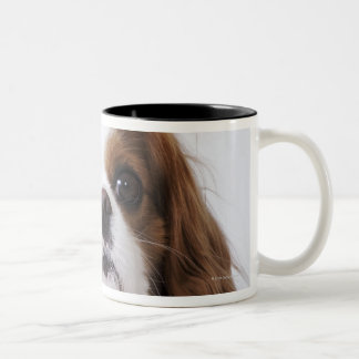 Cavalier King Charles Spaniel sitting in studio Coffee Mugs