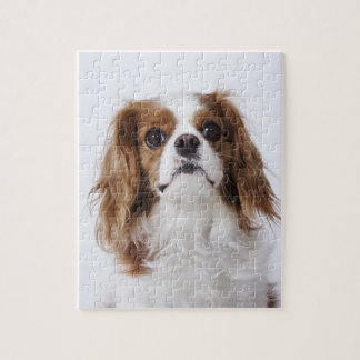 Cavalier King Charles Spaniel sitting in studio Puzzle
