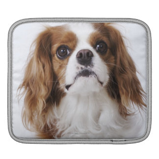 Cavalier King Charles Spaniel sitting in studio Sleeve For iPads