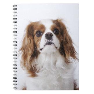 Cavalier King Charles Spaniel sitting in studio Spiral Notebook