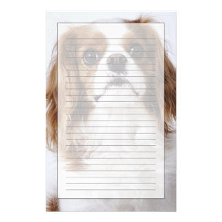 Cavalier King Charles Spaniel sitting in studio Stationery
