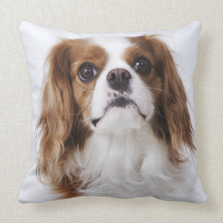 Cavalier King Charles Spaniel sitting in studio Throw Pillow