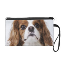 Cavalier King Charles Spaniel sitting in studio Wristlet Purse
