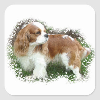 Cavalier King Charles Spaniel Square Sticker