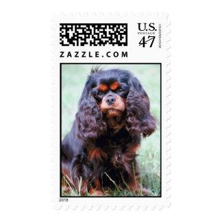 Cavalier King Charles Spaniel Stamp (MEDIUM)