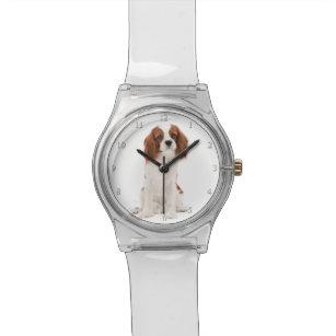 Cavalier King Charles Spaniel Watch