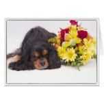 Cavalier King Charles Spaniel With Autumn Flowers Greeting Card