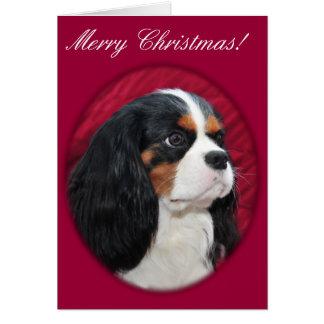 Cavalier King Charles Tri-Color Christmas Card