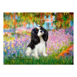 Cavalier King Charles (tri color) - Garden Posters