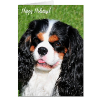 Cavalier King Charles Tri-Color Holiday Card
