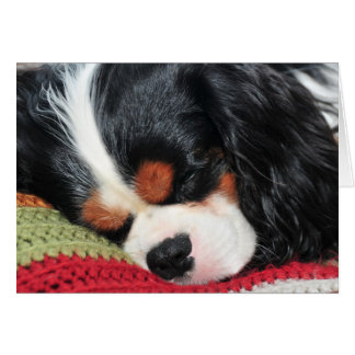Cavalier King Charles Tri-Color Note Card