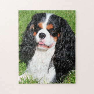 Cavalier King Charles Tri-Color Puzzle