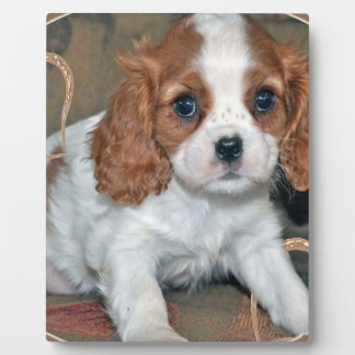 Cavalier King CharlesLove Plaque