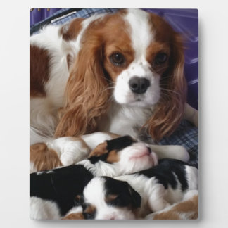 Cavalier Mom and Babies Plaque
