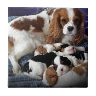 Cavalier Mom and Babies Tile