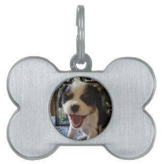 Cavalier Puppy Smiles Pet Tag