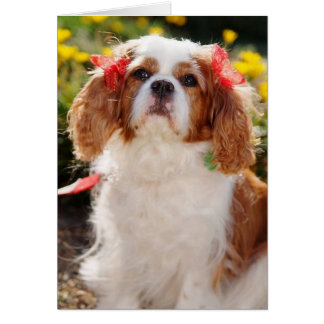 Cavalier Puppy with bows Card