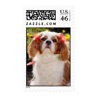 Cavalier Puppy with bows Postage Stamp