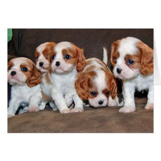 cavalier pups cards