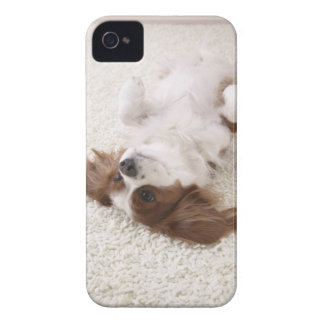 Cavalier showing belly Case-Mate iPhone 4 case