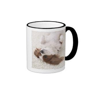Cavalier showing belly coffee mugs